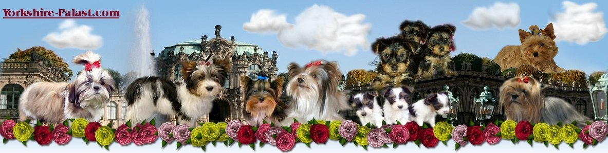 yorkshire terrier palast